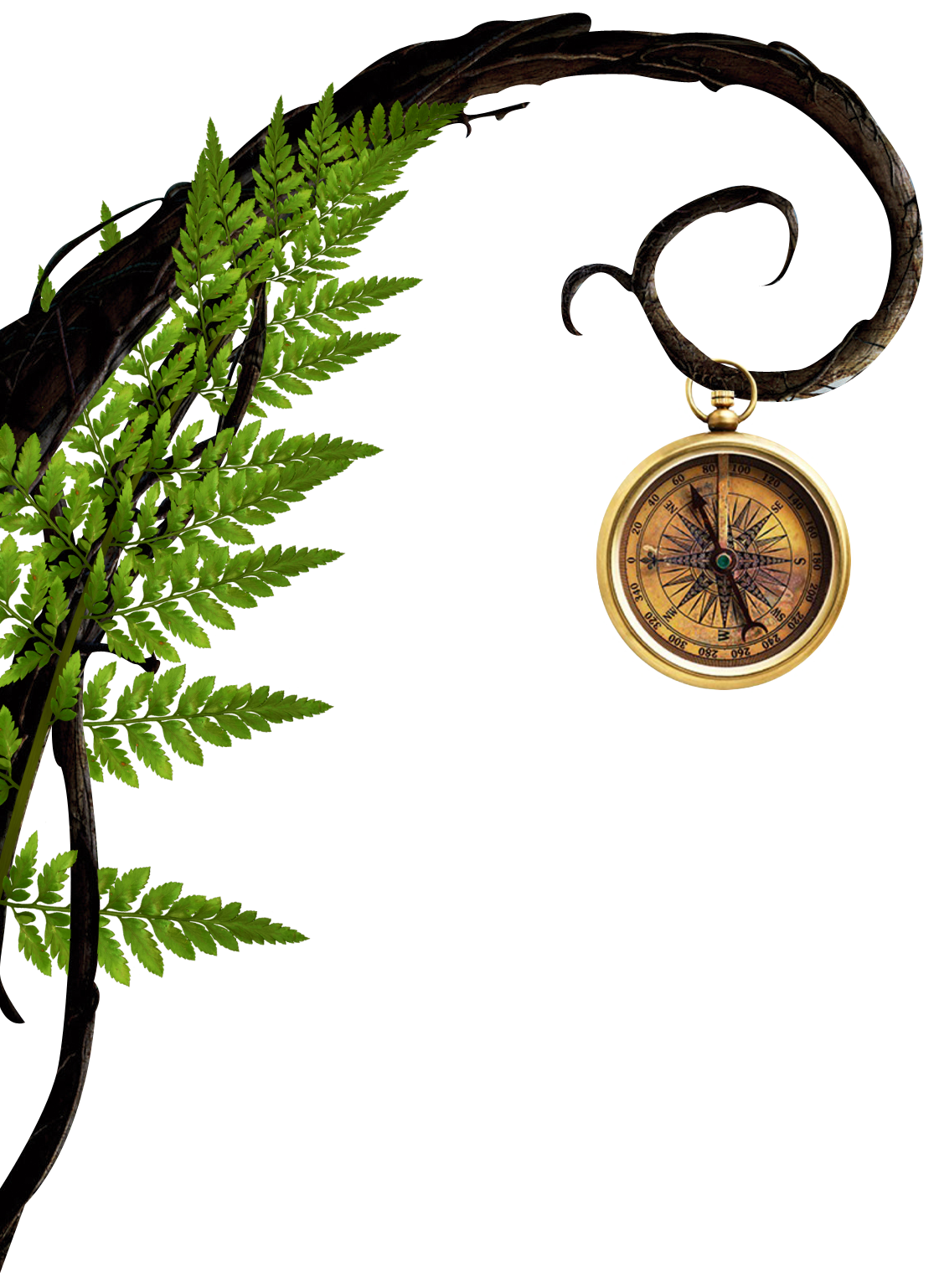 Branch-and-Compass